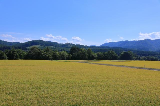 農地、山林